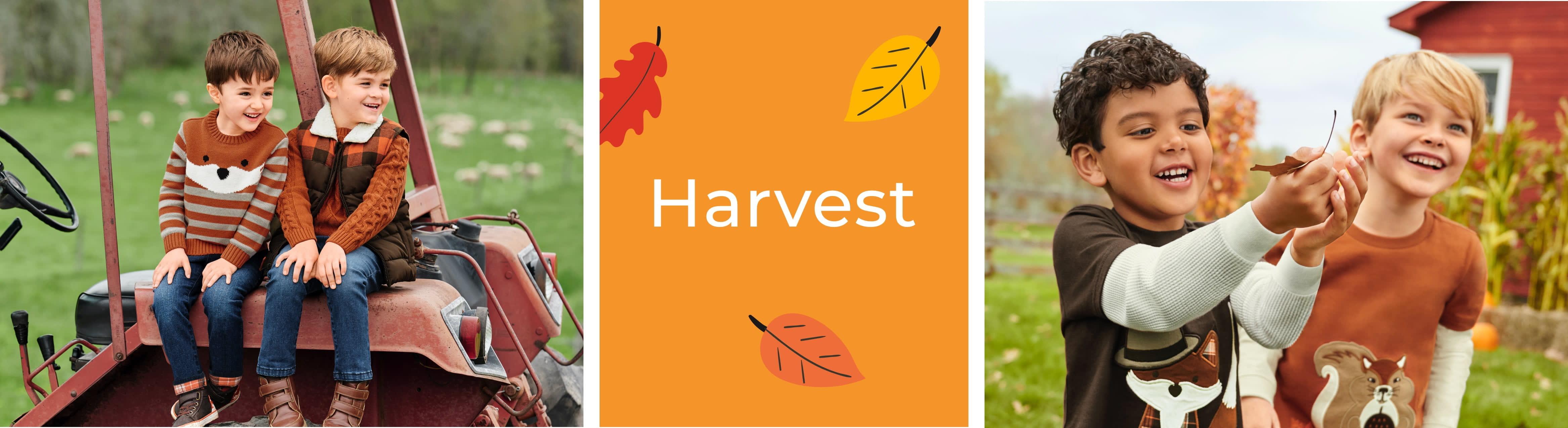 Boy Harvest